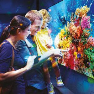 display screen in aquarium